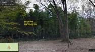 Yoyogi park bamboo grove